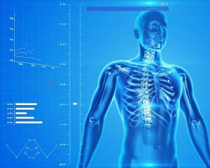 human skeleton 300x240 - Top Apps That Teach Us More About Our Health